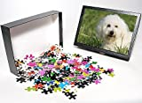 Photo Jigsaw Puzzle of Bichon Frise Dog ...