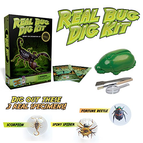 Real Insect Excavation Kit - Dig, Discover, and Collect 3 Real Bugs!