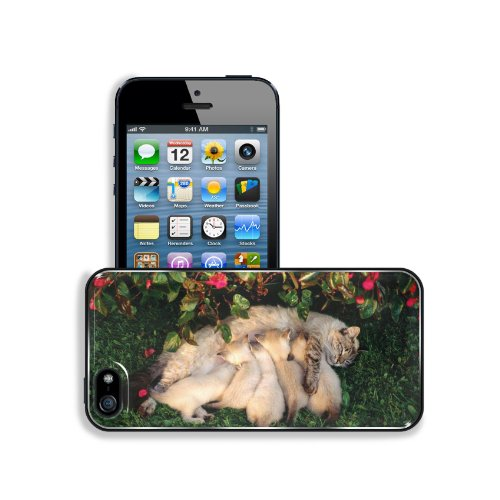 Mother Cat Kittens Drinking Milk Apple Iphone 5 / 5S Snap Cover Premium Leather Design Back Plate Case Customized Made To Order Support Ready 5 Inch (126Mm) X 2 3/8 Inch (61Mm) X 3/8 Inch (10Mm) Liil Iphone_5 5S Professional Case Touch Accessories Graphic