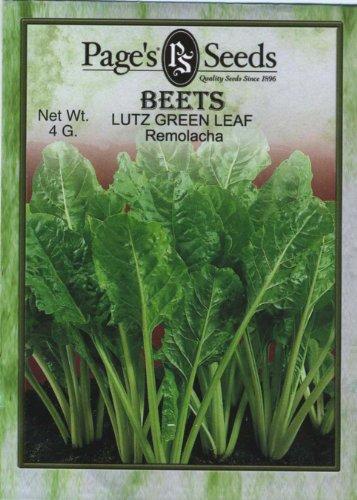 Beet Lutz Green Leaf