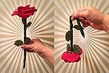 The Breakaway Flower by Alan Wong - Trick