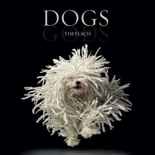 Dogs: Gods