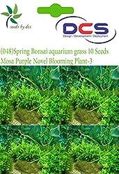DCS (048) Spring Bonsai Aquarium grass 10 Seeds Mosa-Purple Novel Blooming Plant-3