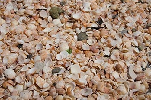 cindy-miller-hopkins-danitadelimont-french-west-indies-shell-beach-detail-of-shell-covered-beach-pho