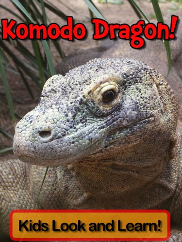 Komodo Dragons! Learn About Komodo Dragons and Enjoy Colorful Pictures - Look and Learn! (50+ Photos of Komodo Dragons)