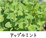ハーブ 【 アップルミント 】 3号ポット苗 宿根草 苗 多年草 耐寒性