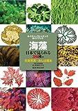 海藻 (ネイチャーウォッチングガイドブック)