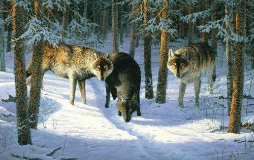 Wolf Trio