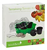 Scott & Co Tantalising Tomato Kit with 6-Tremendous Tomatoes to Grow