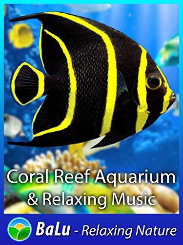 Coral Reef Aquarium & Relaxing Music