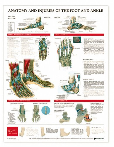 Buy Cheap Anatomy and Injuries of the Foot and Ankle Chart