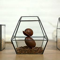 Noah Decoration Lead Free Succulent/Air Plants Glass Terrarium/ Decorative Candle Holder Black