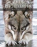Image de Der Wolf - Wild und faszinierend