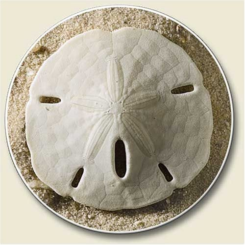 Sand Dollar Car Coasters