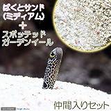 (海水魚)ばくとサンド ミディアム(9L) + スポッテッドガーデンイール(2匹)セット 本州・四国限定[生体]