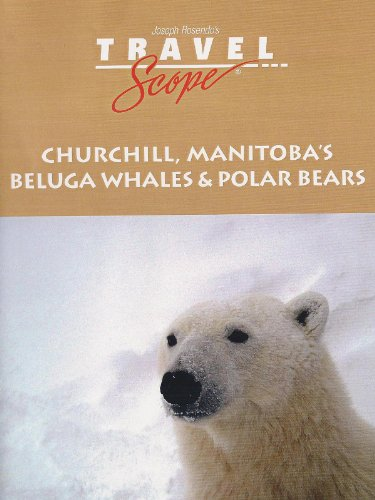 Churchill's Beluga Whales and Polar Bears