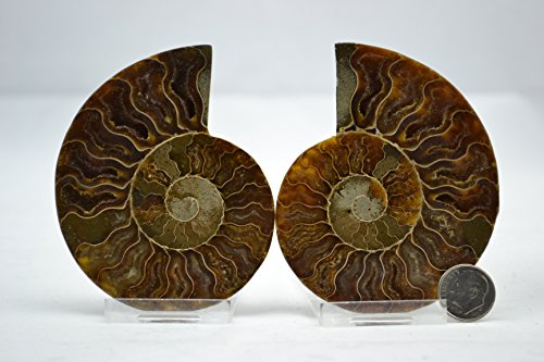 Dinosaur Fossil Pair Ammonite Multi-Color Crystals Large 3.35