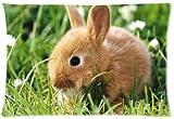 Cute Bunny Rabbit Design Microfiber Pillowcase Cover - Standard Size 20x30 inch (one side)