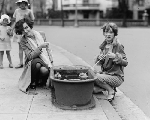1927 photo Ducks in watering trough, 4/21/27 Vintage Black & White Photograph g6 (Watering Trough compare prices)