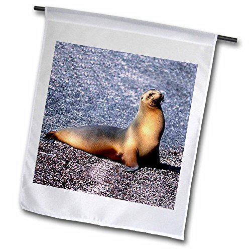 Sea Lion Garden Flag<br> 12 by 18-Inch