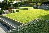 Image de Moderne Gartenarchitektur - minimalistisch, formal, puristisch (Garten- und Ideenbücher BJVV)