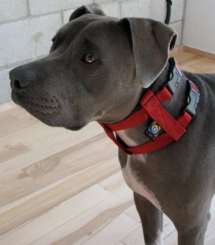 Illusion Dog Collar & Leash Set: By Dog Whisperer Cesar Millan (Medium Red)
