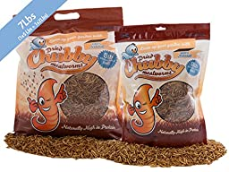 Chubby Mealworms High Quality Bulk Dried Mealworms for Wild Birds, Chickens etc. (10Lbs)