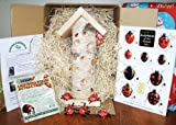 Ladybird Gift Box-great gardening gift