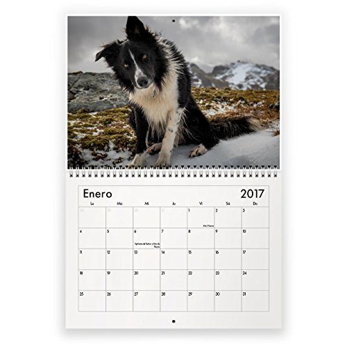 border-collie-calendario-mural-2017