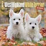 West Highland White Terrier Puppies 2014 18 Month Calendar