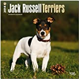 BrownTrout Jack Russell Terriers (Intl) 2014 Wall
