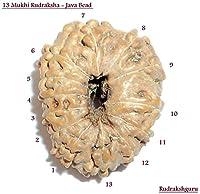 13 Mukhi Rudraksh / Thirteen Face Rudraksha - Java - Lab Certified