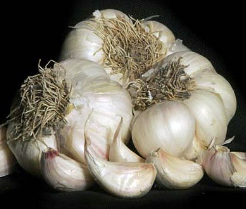 3+ Ounces Silver Rose Garlic Bulbs
