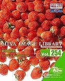 MIXA IMAGE LIBRARY Vol.254 野菜と果実