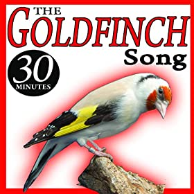 The goldfinch song ii sounds birds the sound of nature birds