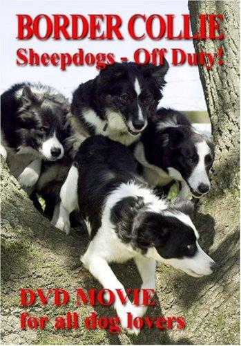 border-collie-sheepdogs-off-duty-2005-dvd