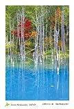 "PC-219 [ 20円 ] 北海道 風景 名所 はがき ポストカード 美瑛町 青い池 1枚入 【 Postcards from Hokkaido, JAPAN -a piece- "" Blue Pond in Biei "" 】"