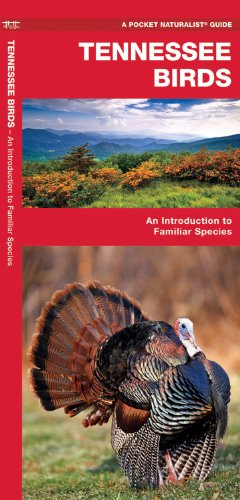 Tennessee Birds: An Introduction to Familiar Species (State Nature Guides)