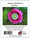 500 Poppy Flower Seeds. Papaver Somniferum. Hot Pink Poppies. One Stop Poppy Shoppe® Brand.