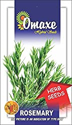 Omaxe Rosemary Imported Herb - 30 seeds pack herb seeds