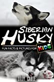 Siberian Husky: Fun Facts & Pictures For Kids