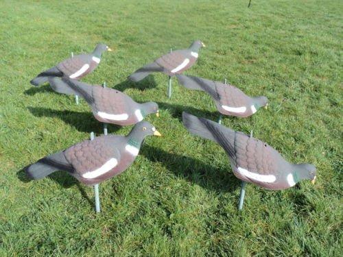 freshgadgetz-6-richiami-per-piccioni-perfetti-in-ogni-dettaglio