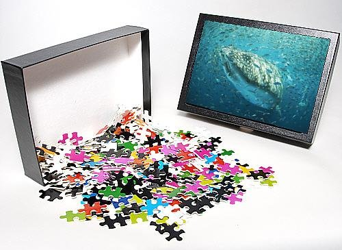 Photo Jigsaw Puzzle Of Whale Shark - In Bait Ball front-610025