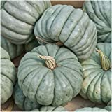 Package of 20 Seeds, Blue Jarrahdale Pumpkin (Cucurbita maxima) Non-GMO Seeds by Seed Needs