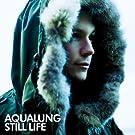 Still Life (New Version)