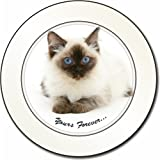 Ragdoll Cat Sentiment Car Tax Disc Holder New Animal, Ref:AC-168T