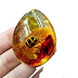 new insect amber Drops Pendant Ladybug amber Pendant 5543mm