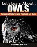 Owls (Lets Learn About)