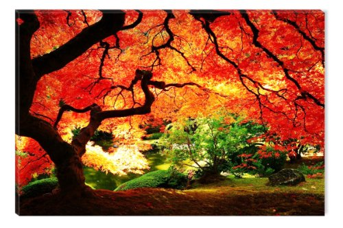 Startonight Wall Art Canvas Red Maple Nature, Trees USA Design for Home Decor, Dual View Surprise Artwork Modern Framed Ready to Hang Wall Art 23.62 X 35.43 Inch 100% Original Art Painting! (Real Tree Car Window Decal compare prices)