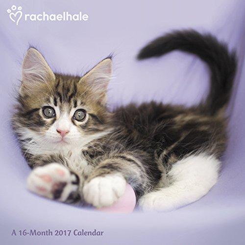 Rachael Hale Cats Wall Calendar (2017)